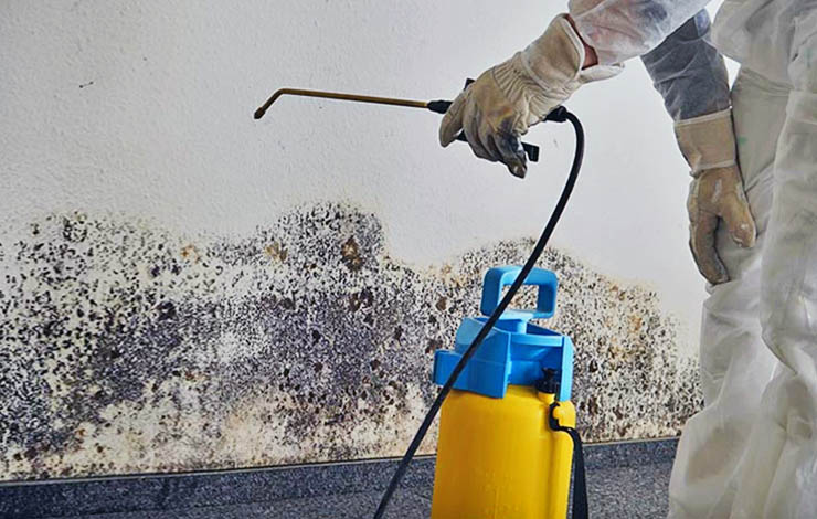 Mold Remediation In Oahu Honolulu